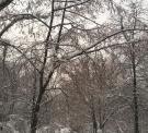 Долгожданная зима